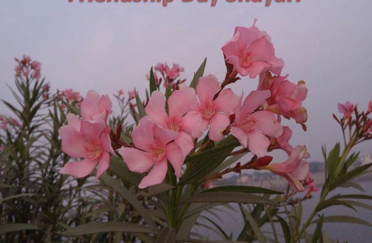 Happy Friendship Day Shayari Hindi English for Special Friends