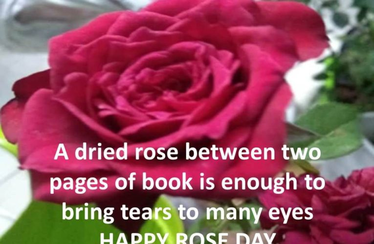 Rose Day Quotes for Friends and Lovers for Rose Day 2021