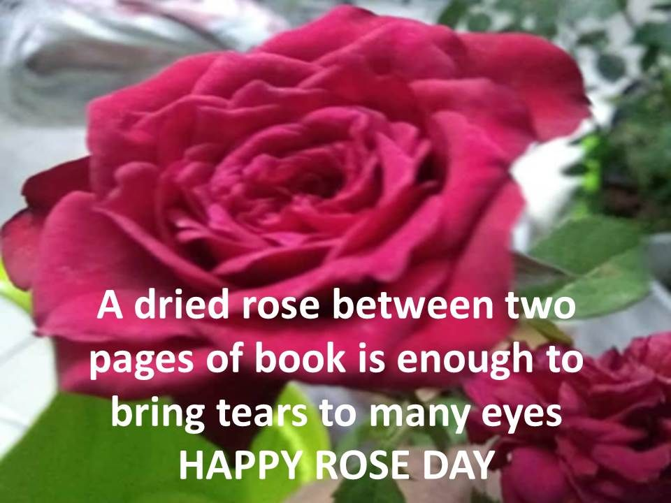 rose day quotes 2021 with images